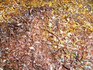 Brass recycling Austin: Brass shavings